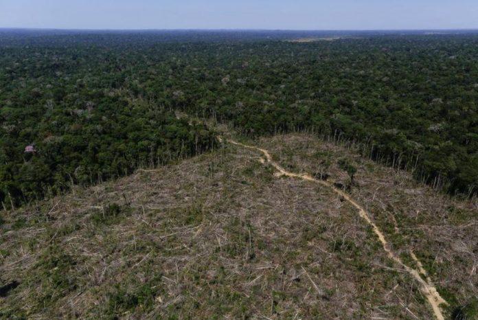 Desmatamento da Amazônia em Apuí, no Amazonas 27/07/2017 REUTERS/Bruno Kell