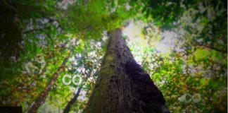 BBC Amazônia